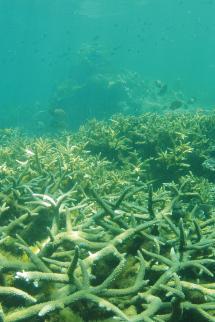 Total ÎLE MAURICE Pour la protection des coraux
